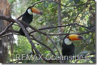 REMAX Jaco Costa Rica Real Estate landscape (16)