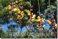 REMAX Jaco Costa Rica Real Estate landscape (19)