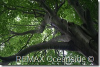 REMAX Jaco Costa Rica Real Estate landscape (23)