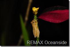 Costa Rica Market Update tree frog
